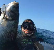Positions FNPSA : Pêche du bar en mer du nord et en manche en 2017