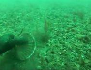 Pêche des mollusques bivalves en rade de Brest et baie de Camaret