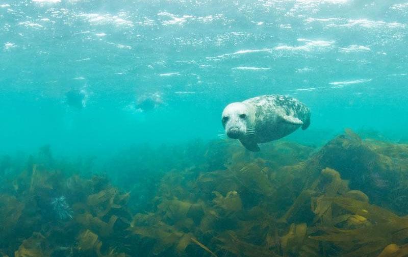Snorkeling et randonnée palmée en Baie de Morlaix