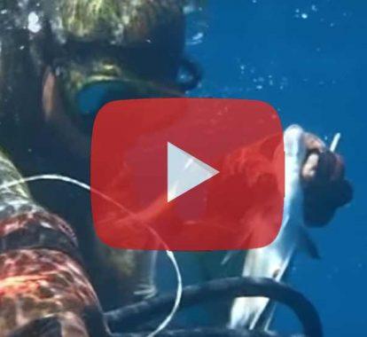 Youtube : Top 10 des vidéos chasse sous-marine les plus vues en 2016
