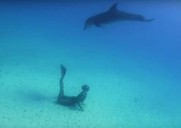 Web Série «The Freediving Univers» : The dolphins hearts (épisode 1)
