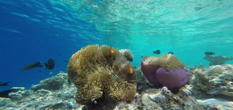 La Mer Rouge, destination idéale pour une croisière plongée d'exception