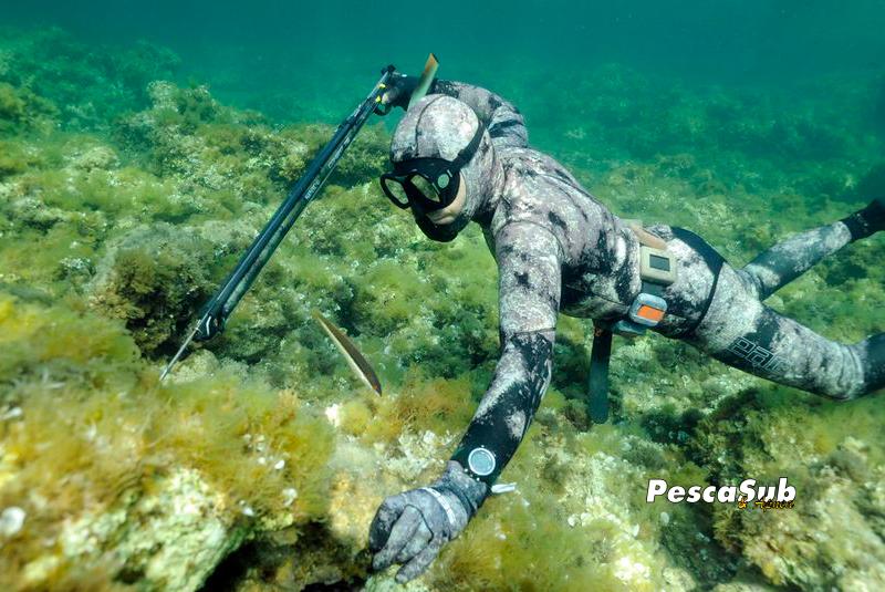 L'Agachon | technique de chasse sous-marine | Le Petit Plongeur